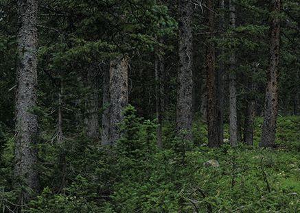 Miškų supirkėjų pasiūla